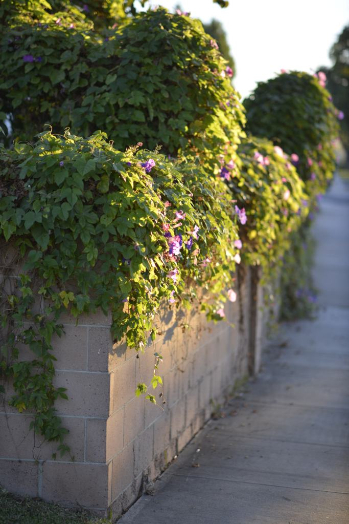 wall-of-green